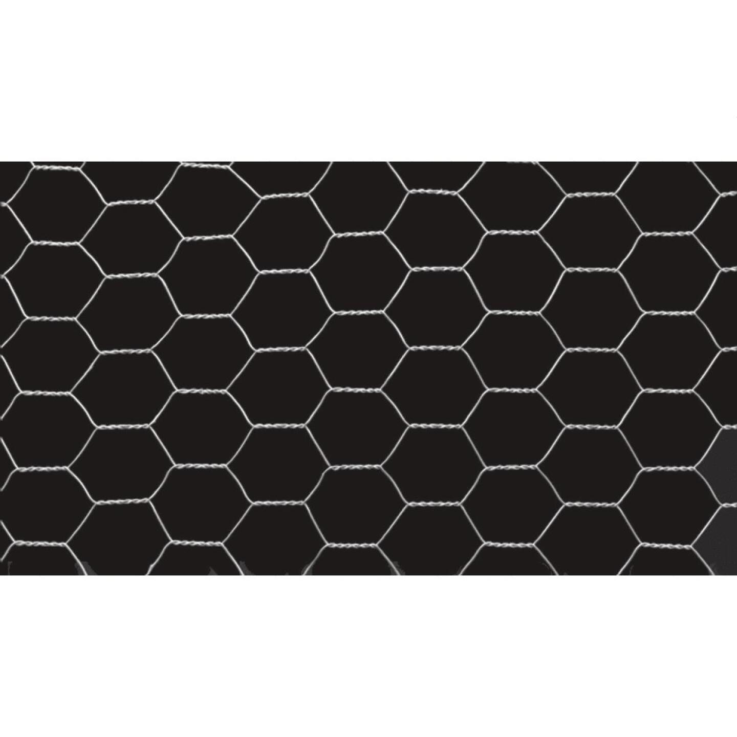 1/2 In. x 36 In. H. x 10 Ft. L. Hexagonal Wire Poultry Netting Image 3